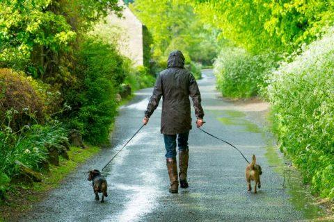 Generic-dog-walking